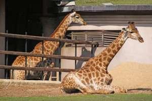 Zoo dating